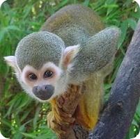 zoo-frejus-singe